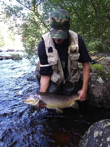 Brown trout Fly Fishing on runnig waters