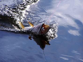 PikeSpinning on Lakes